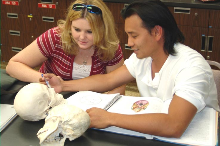Two students examining a skull