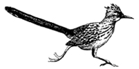 Roadrunner Graphic